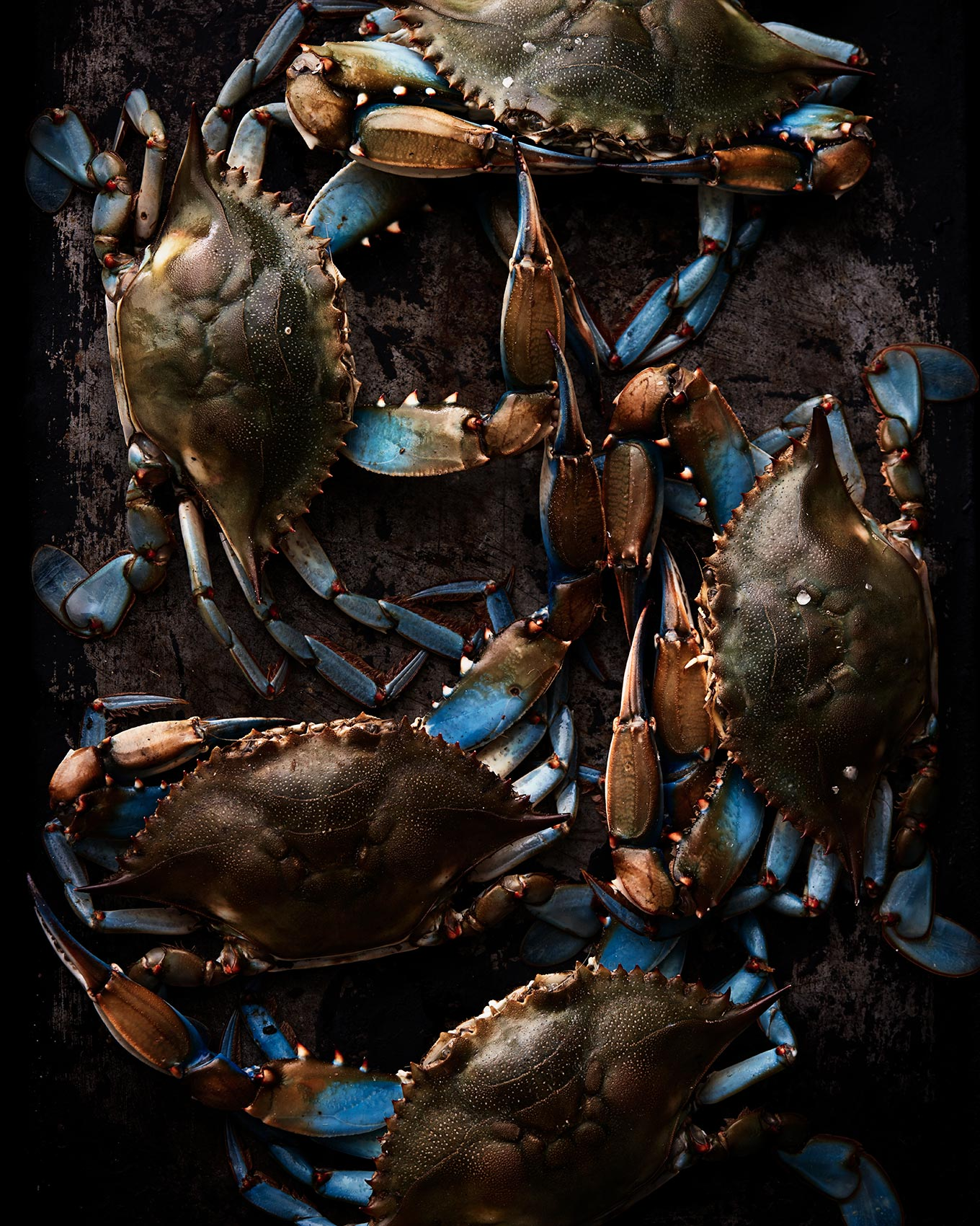 Fresh Maryland blue crabs arranged on a metal baking pan.