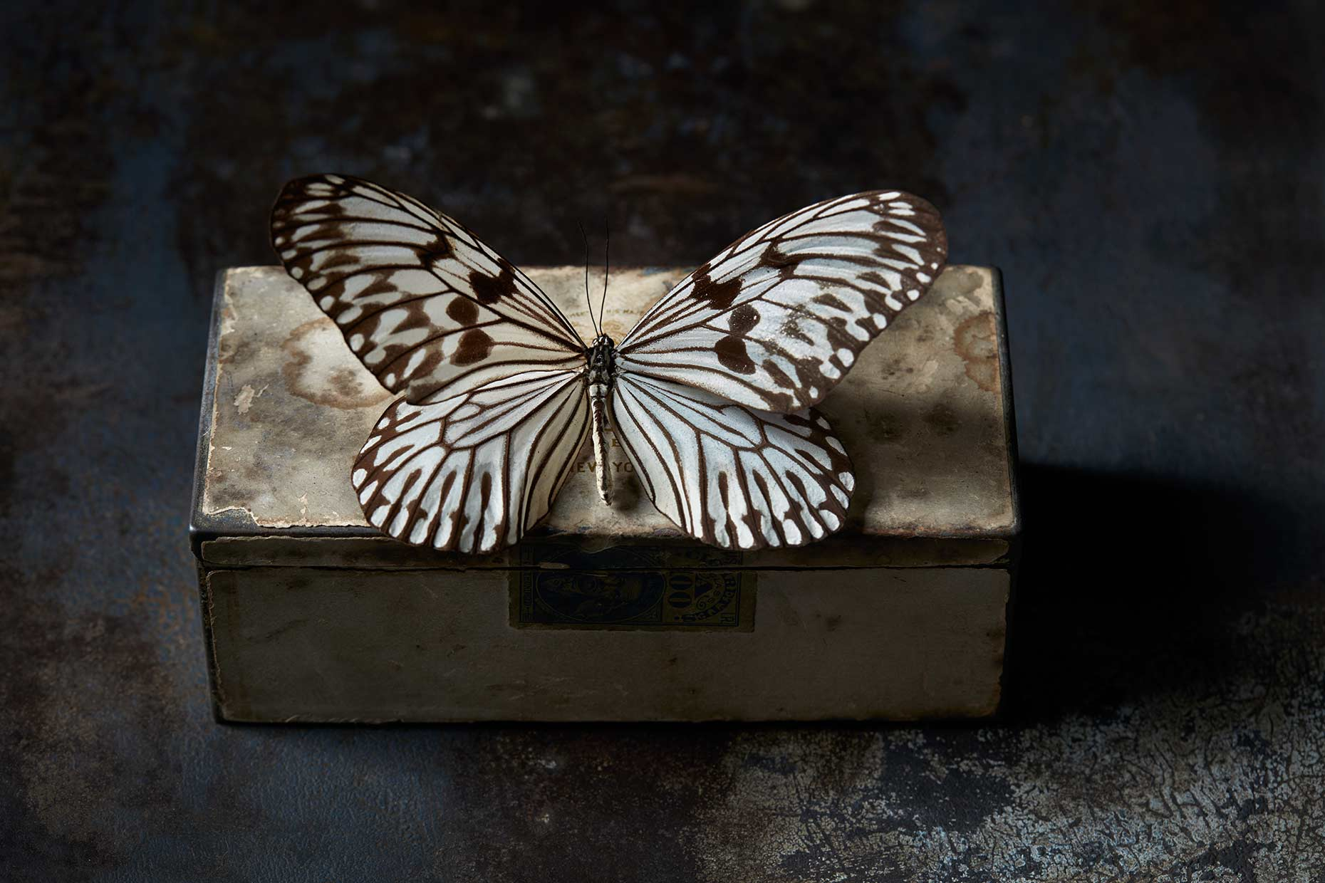 Beautiful butterfly seated on a old metal box.