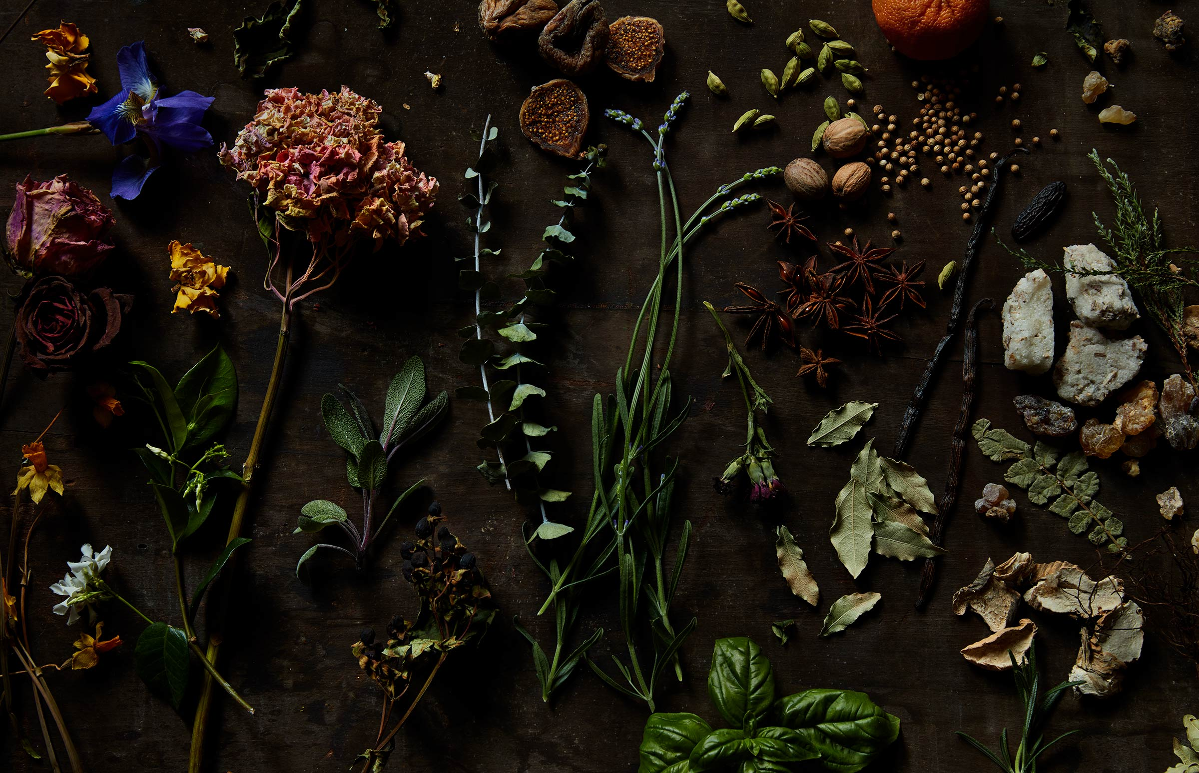 natural plants, leaves and minerals laid out in a fine art composition