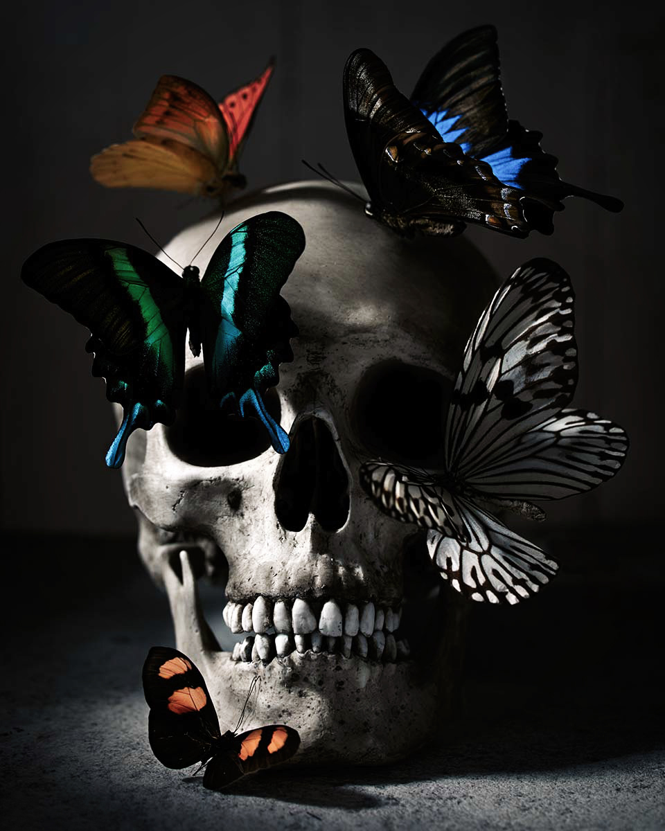 Vanitas style photograph featuring a skull and butterflies by Trevor Dixon.