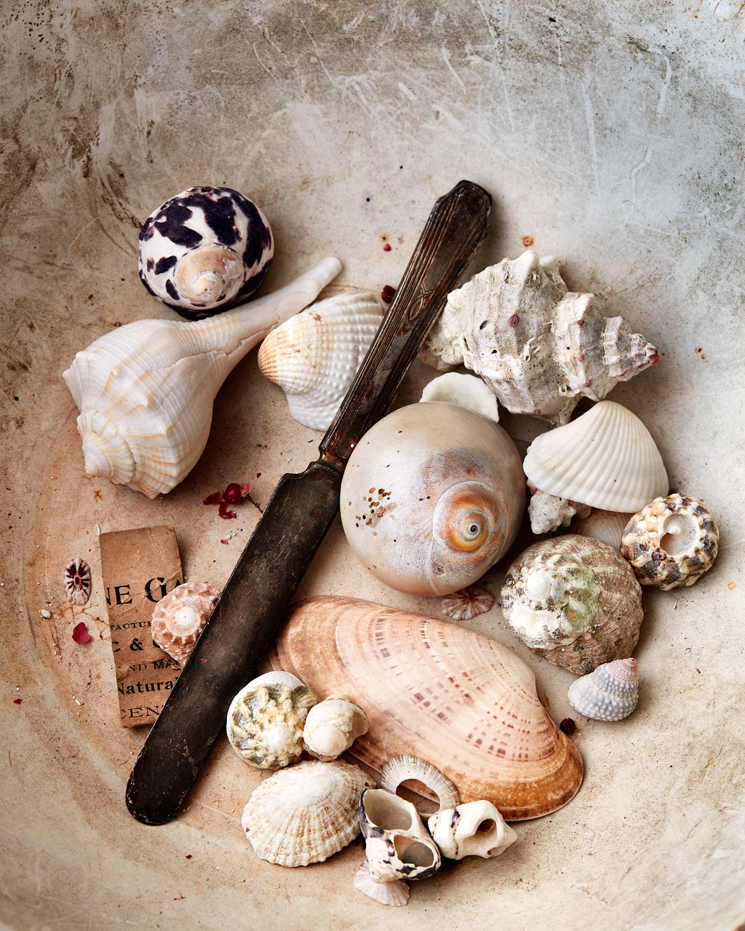 Pretty seashells and other objects in a vintage bowl