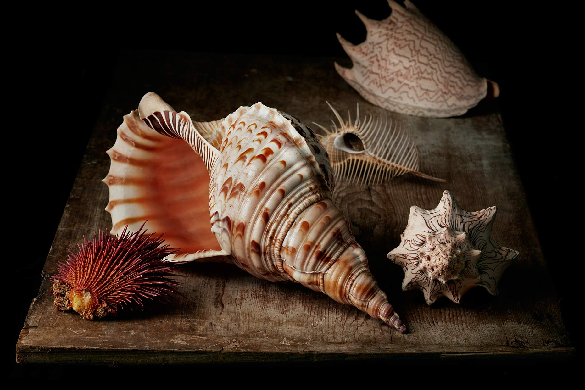 Still life photo of various seashells on wooden board.